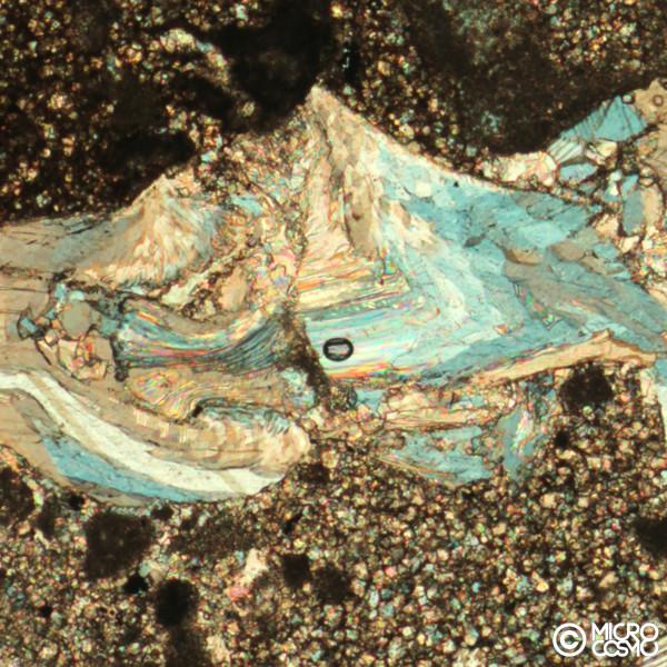 brachiopode fossile al microscopio polarizzatore